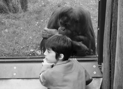 Orangutan and Boy, Berlin Zoo