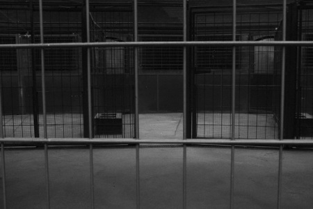 Cages, Berlin Zoo