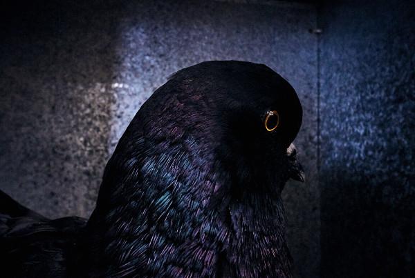 Fowl_001